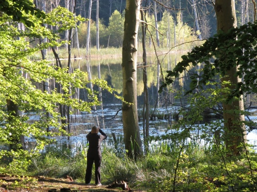 Im Nationalpark wird Wildnis zum Erlebnis. Foto: Urich Meßner/NPA