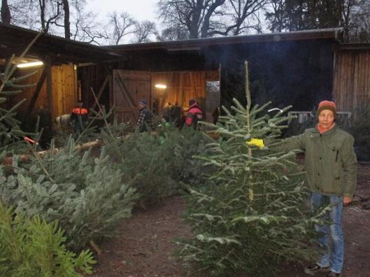 weihnachtsbaum_drewin
