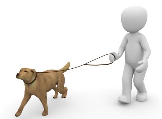 dog-1015660_1920