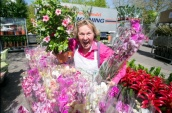 holländischer Blumenkönig